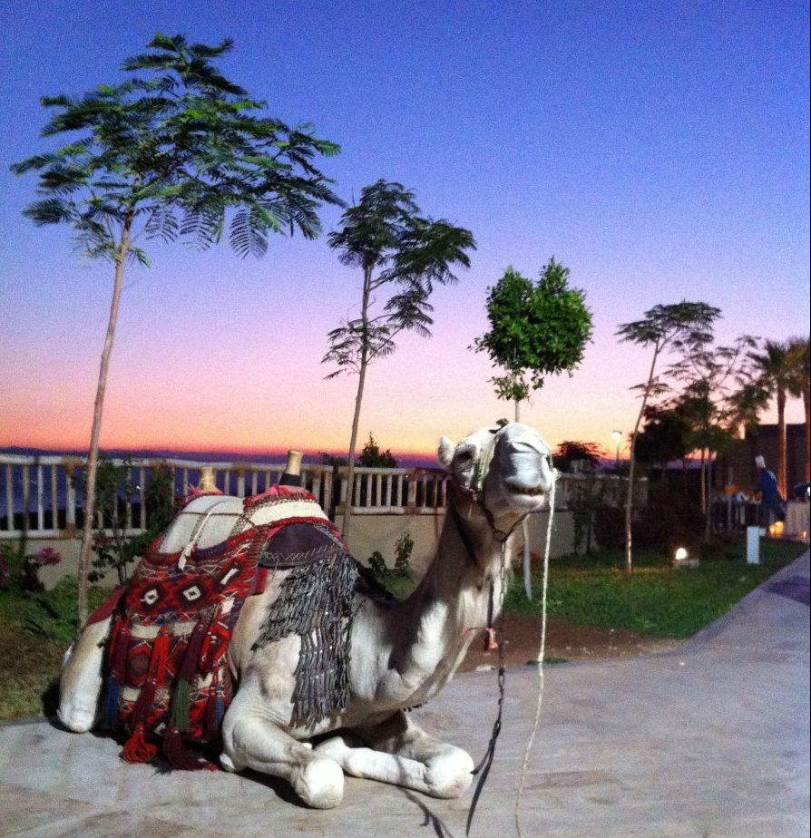Im Reich der Wüstensöhne Jordanien Kamel