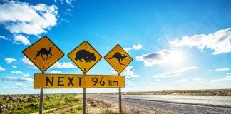 Einzigartige Wildlife-Erlebnisse in Südaustralien
