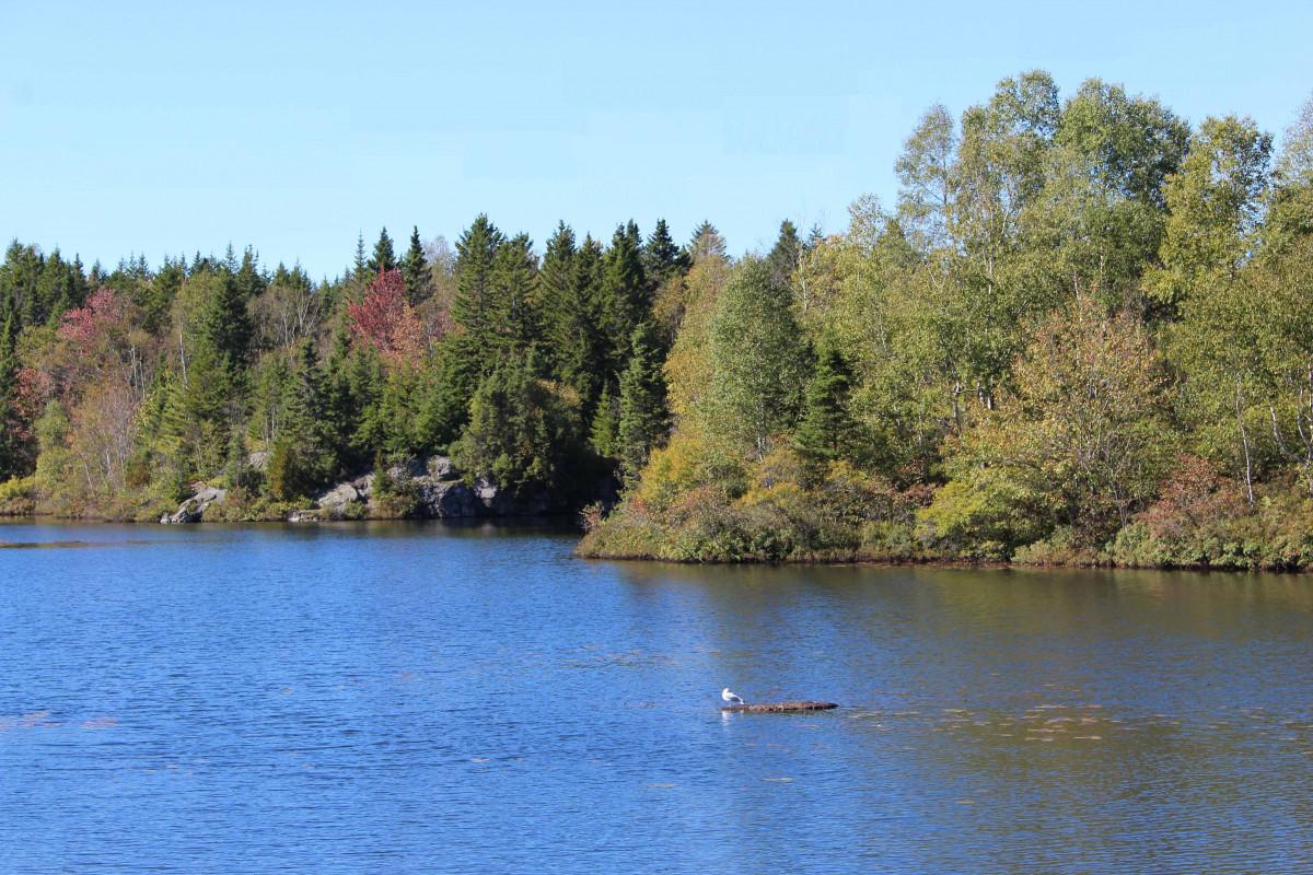 Nordamerika Kreuzfahrt mit Umweltschutz 7