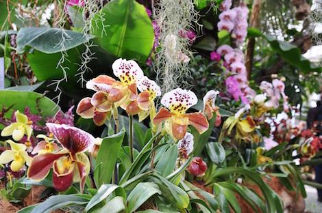 Blumen auf der Insel Mainau