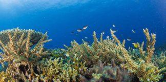 Philippinen Amun Ini Dive Tauchurlaub