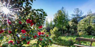 Edle Blumen im Tessin