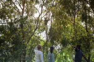 Aborigine Kultur ist UNESCO Welterbe