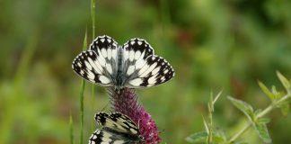 Artenvielfalt in den Ammergauer Alpen