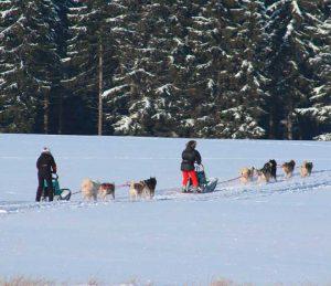 Mit Huskys und Schlitten durch den Thüringer Wald