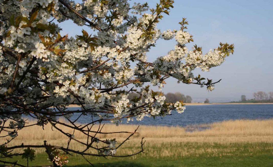 Frühlingsfang auf der Insel Rügen