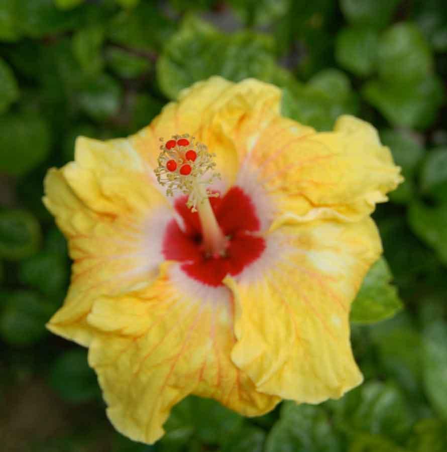 Wir können einfach nicht aufhören, die vielen exotischen Blüten zu fotografieren.