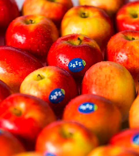 Jazz_Äpfel