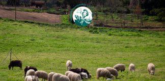 Tramudas Transumanza Online in Sardinien