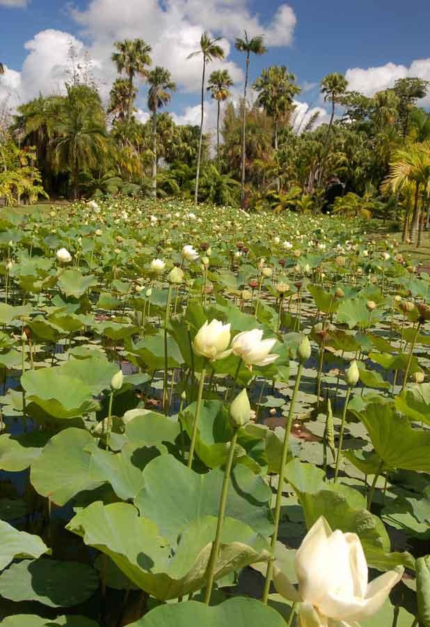 Mauritius mehr als nur Sand und Strand
