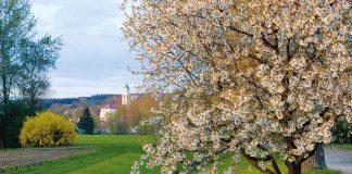 Streuobstwiesen Bad Birnbach / Wolfra