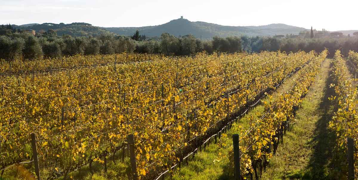 Eine Weinreise in die Toskana Teil 3