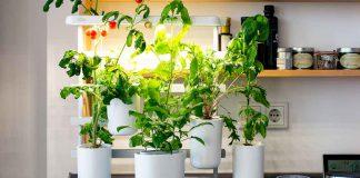 Gewinnen Sie einen Indoor-Garten!