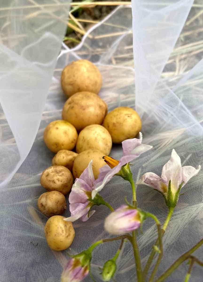 Home-Wellness mit Kartoffel, Gesundheit