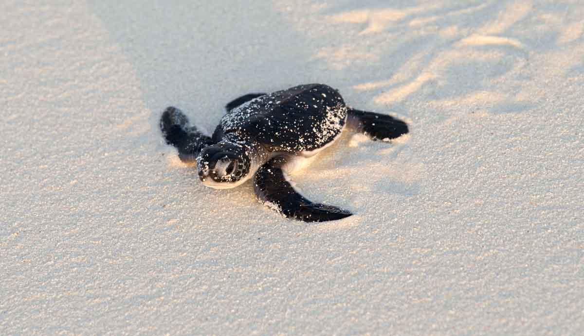 Korallenkörbe pflanzen, Schildkröten retten, Rhinos schützen