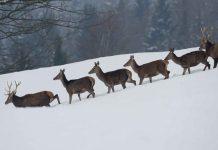 Naturpark Bayerischer Wald: Treffen mit dem König der Wälder