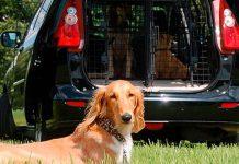 Hundebebedarf für Anspruchsvolle