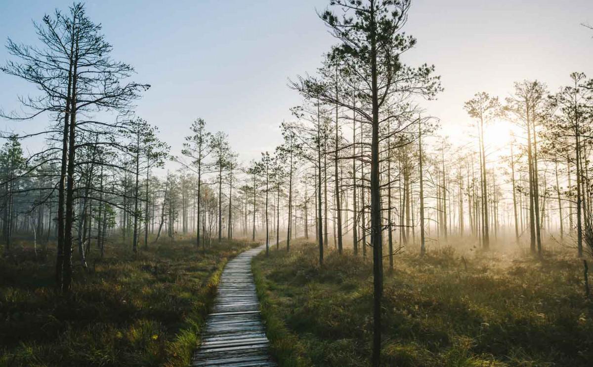 Litauen: Top-Wanderwege durch Sümpfe, Klippen und Lagunen